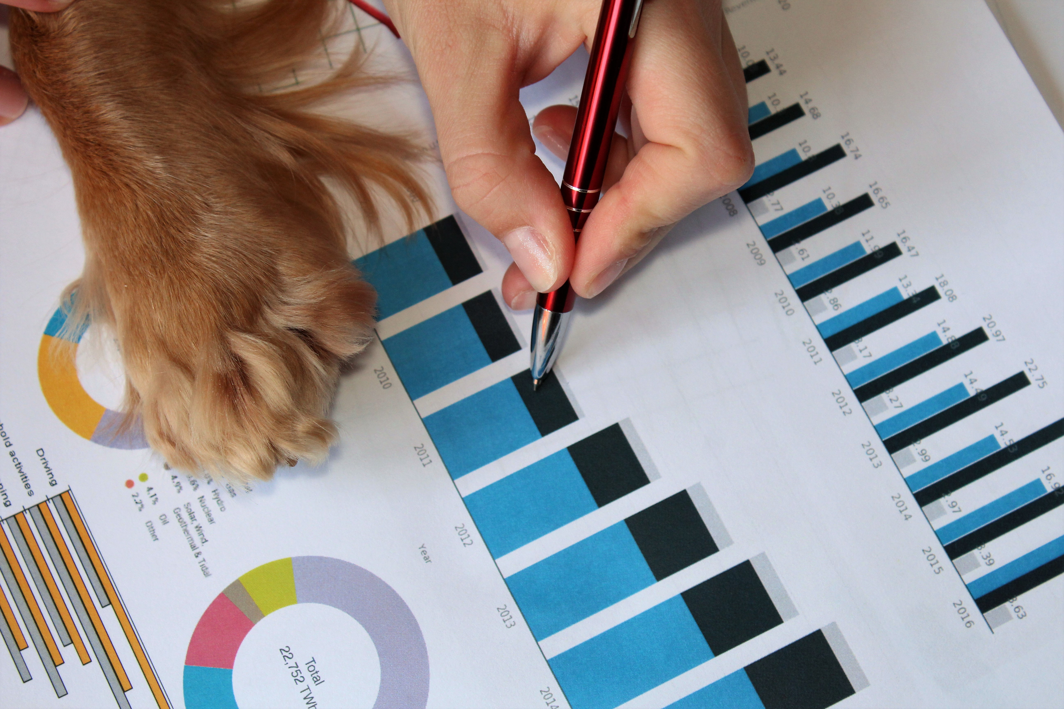 Dog paw on business documents.
